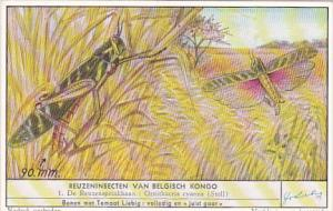 Liebig S1644 Large Insects Of The Belgian Congo No 1 Grasshopper