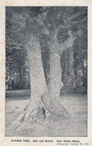 Double Tree , Oak & Beech , near Rufus Stone , NEW FOREST , UK , 00-10s