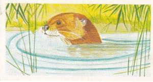 Trade Card Brooke Oxo Vanishing Wildlife No 32 Giant Otter