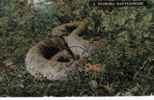 A Florida Rattlesnake , 1911