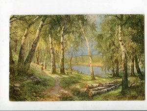 285894 RUSSIA Birch Grove by ZOTOV Vintage #7 Postcard