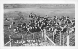 F26/ Hampton Oregon RPPC Postcard c1950s Future Steaks Cattle