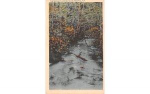 The Brook Rock Hill, New York Postcard