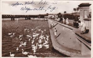 RP:The Swans, WEYMOUTH, Norfolk, England, United Kingdom, 10-20s