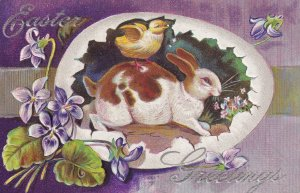 EASTER Greetings; 1900-1910's; Broken Egg With Rabbit With Chick, Violets