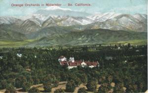 Orange Orchards in Midwinter Southern California CA Calif c1906 Postcard E7