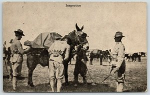 Chattanooga TN~Photographer Stratton~Military~Soldiers Inspection of Horse~c1916