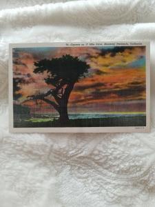 Antique Postcard, Cyprus on 17 Mile Drive, Monterey Peninsula, California