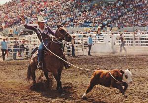 Canada Calf Roping Calgary Exhibition and Stampede Alberta