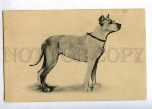 202362 GREAT DANE Dog Vintage postcard