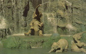 Walt Disney World , Orlando , Florida , 1972 ; Elephant Bathing Pool