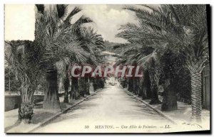 Old Postcard Menton A Palm Allee