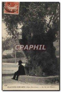 Old Postcard Tree Beausoleil King of Olives