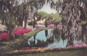 Middleton Place Gardens Charleston South Carolina Handcolored Albertype