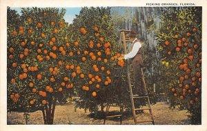 Picking oranges Florida, USA Florida Oranges Writing on Back