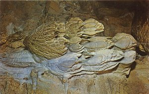 Horse Cave Kentucky 1960s Postcard The Grecian Pendant Mammoth Onyx Cave