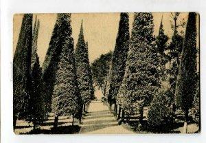 3137901 Adjara Georgia BATUMI Boulevard Cypress alley Vintage