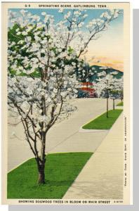 Gatlinburg,Tennessee/TN Postcard,Main St/Springtime,Nr Mint