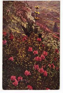 Mountain Flowers, Japan , 1910s-30s