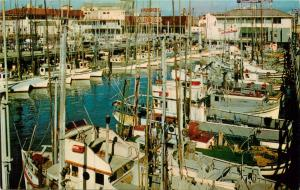 Postcard San Francisco CA California Fisherman's Wharf Fishing Fleet Alioto's