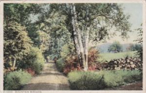 Trees Mountain Birches 1916 Detroit Publishing