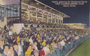 Florida Miami Nightly Gathering For Greyhound Racing West Flagler Kennel Club