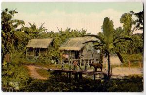 Chinese Farmer's Banana Plantation