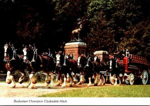 Budweiser Champion Clydesdale Hitch Passing Through Main Gate Grant's Farm