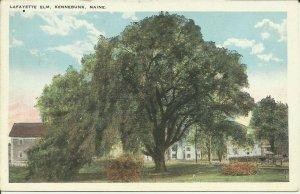 Kennebunk, Maine, Lafayette Elm