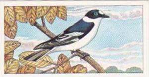 Glengettie Tea Trade Card Rare British Birds No 14 Collared Flycatcher