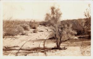 DESERT CENTER CALIFORNIA~SMOKE TREES & DESERT ROAD-REAL PHOTO POSTCARD 1944 PSMK