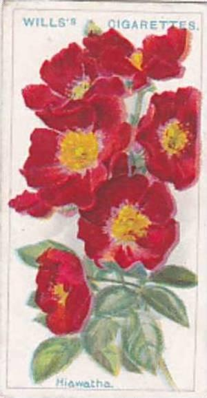 Wills Vintage Cigarette Card Roses A Series 1912 No 31 Hiawatha