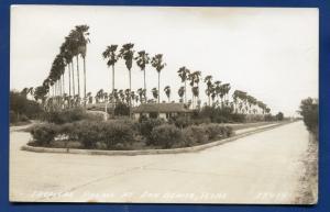 San Benito Texas tx Tropical Palm Trees real photo postcard RPPC