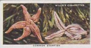 Wills Vintage Cigarette Card The Sea-Shore No 39 Common Starfish  1938