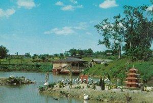 SINGAPORE , 1950-70s ; Jurong Bird Park