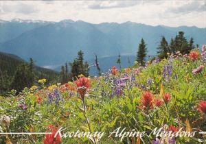 Canada British Columbia Kootenay Alpine Meadows