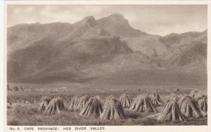 CAPE PROVINCE, South Africa, 1900-1910's; Hex River Valley