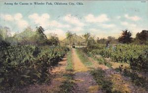Oklahoma Oklahoma City Among The Cannas In Wheeler Park 1910 Curteich
