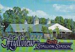 Florida Reddick Hyllview Farms Hyllview The Stallion Station