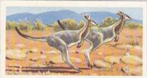 Brooke Bond Vintage Trade Card Wildlife In Danger 1963 No 3 Bridle Nail-Taile...