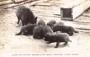 Carcross Yukon Canada Watsons Fox Ranch Silver Fox Puppies Real Photo PC AA33874