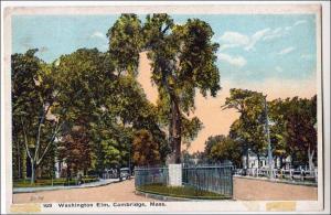 Washington Elm, Cambridge Mass