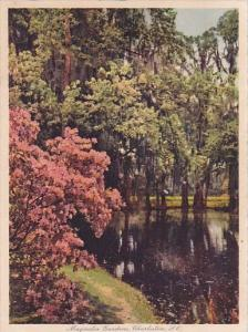 the Most Beautiful Gardens In The World Magnolia Gardens Charleston South Car...