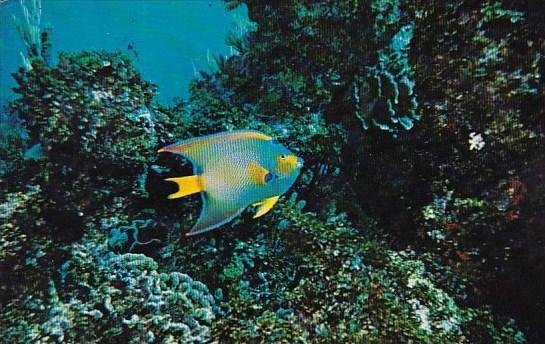 Angel Fish And Coral Formation At John Pennekamp Coral Reef State Park Key La...