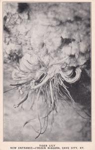 CAVE CITY , Kentucky, 1910s ; Tiger Lilly, New Entrance-Frozen Niagara