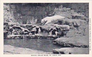Diving Polar Bear Saint Louis Zoo Saint Louis Missouri