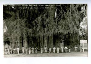 172888 MEXICO OAX part of tree trunk tule Vintage photo PC