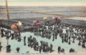 Japan Farming Rice Field Tying up Young Plants Antique Postcard J66879