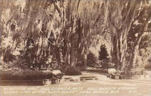 Alabama Mobile Bellingrath Gardens Oak Tree &amp  Spanish Moss Real Photo RPPC