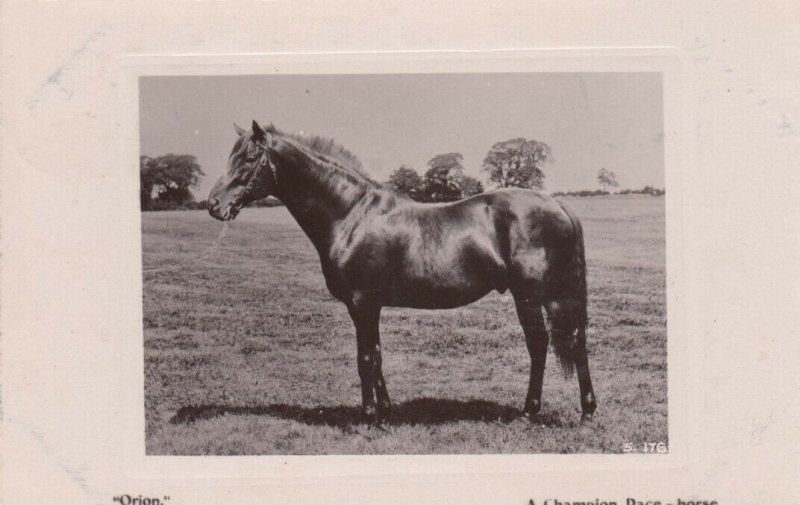RP: A Champion Race-Horse , England , 1908
